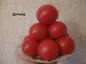 дитмар2
