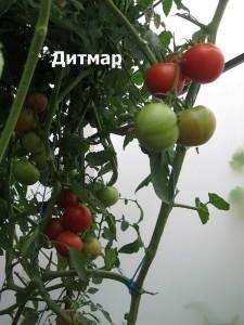 дитмар4