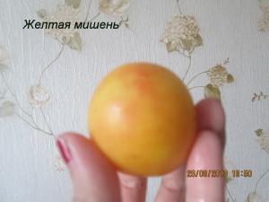 желтая мишень5