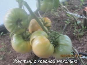 желтый с красной мякотью
