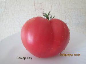 земер-кау-300x225