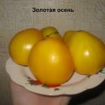золотая осень6