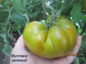 мустанг зеленый51