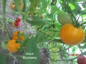илья муромец2