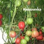 киевлянка19