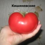 кишиневские6