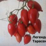 легенда тарасенко5