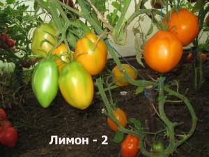 лимон-26
