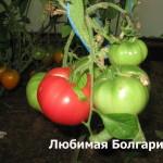 любимая болгария6