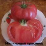 малиновый красавец81