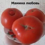 мамина любовь1