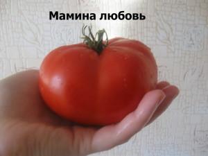 мамина любовь4