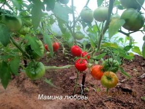 мамина любовь9
