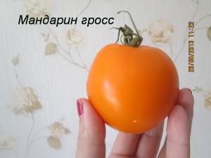мандарин гросс1
