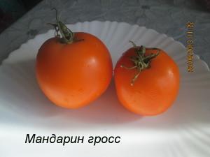 мандарин гросс7