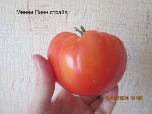 минни пинн страйп8