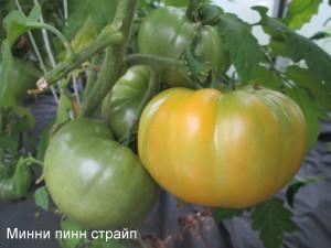 минни пинн страй4п