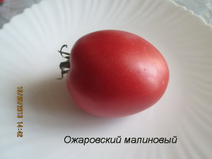 ожаровский малиновый6