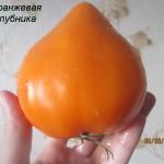 оранжевая клубника3