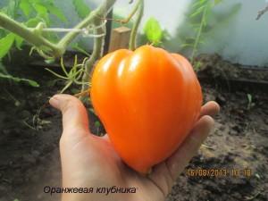 оранжевая клубника5