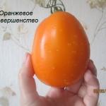 оранжевое совершенство4