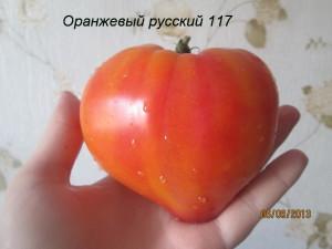 оранжевый русский 117(1)