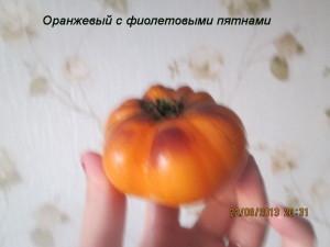 оранжевый с фиолетовыми пятнами1