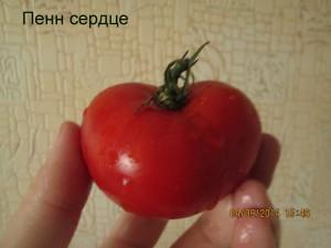 пенн сердце1