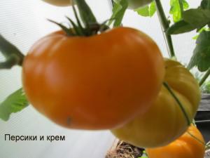 персики и крем1