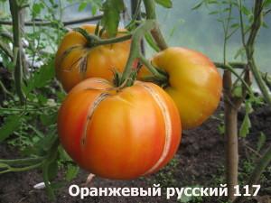1Оранжевый русский 117