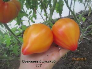 1оранжевый русский117(2)