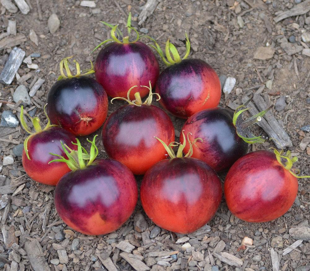 Помидоры. Выращивание томатов. Сорта и рассада 1