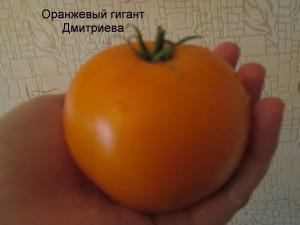 4оранжевый гигант дмитриева