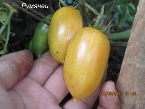 4румянец (1)