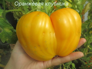 5оранжевая клубника1