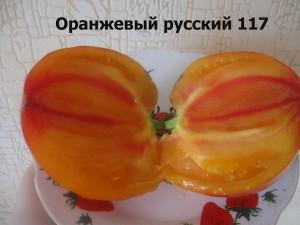 5оранжевый русский 117