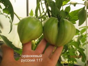 7оранжевый русский117