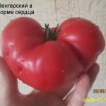 венгерский в форме сердца (2)