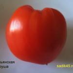 итальянская груша (1)