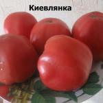 киевлянка