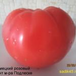 немецкий розовый гигант м-ра подлеске (3)