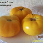 сладкий озарк оранжевый (1)