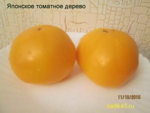 японское томатное дерево 1