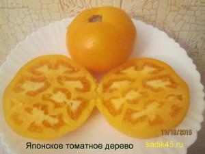 японское томатное дерево