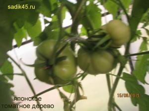 японское томатное дерево1)