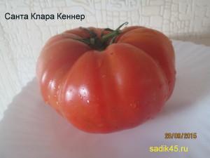 санта клара кеннер (1)