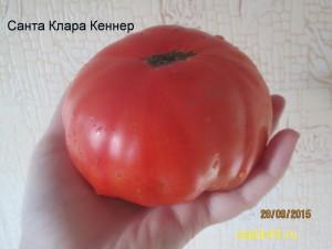 санта клара кеннер (2)