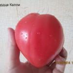 сердце келли5