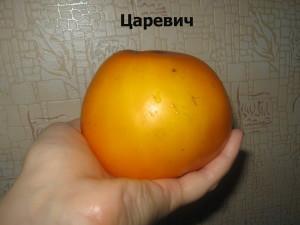 царевич (18)