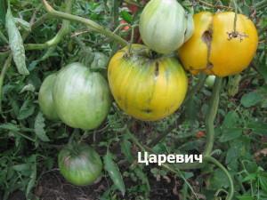 царевич(5)